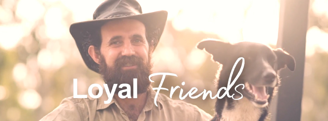 Loyal friends banner slider